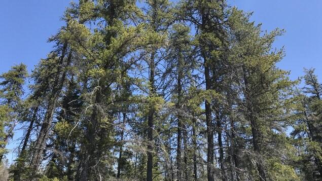 Des arbres.