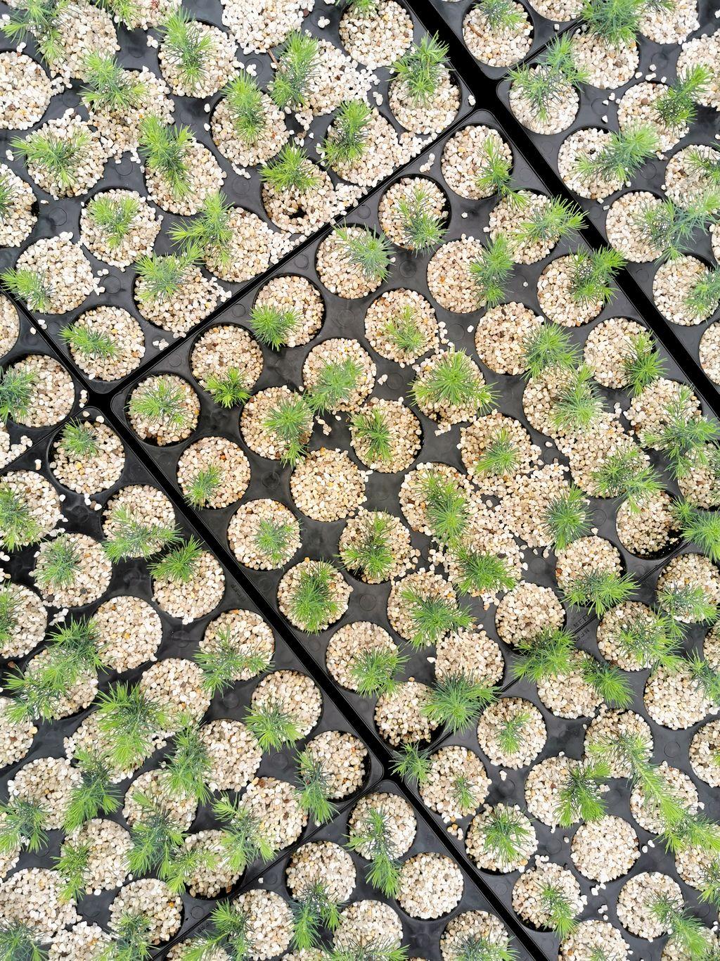 Environ 10 millions de plants sont produits chaque année à la Pépinière de Normandin.